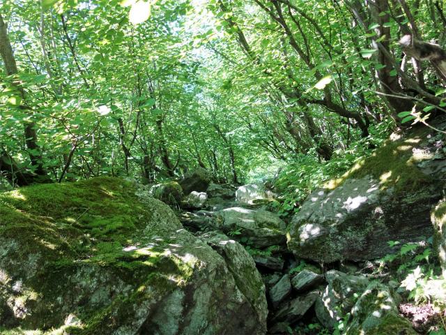 北岳(左俣コース)登山口コースガイド 岩の転がる急登【登山口ナビ】