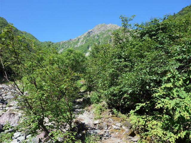北岳(左俣コース)登山口コースガイド 左岸からの北岳【登山口ナビ】