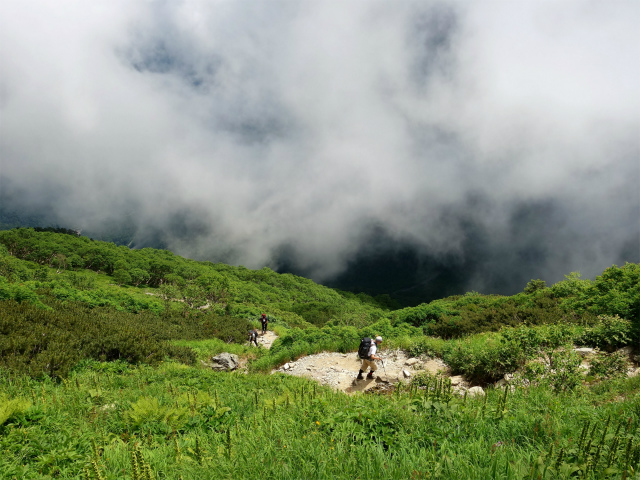 北岳(左俣コース)登山口コースガイド ハイマツ帯【登山口ナビ】