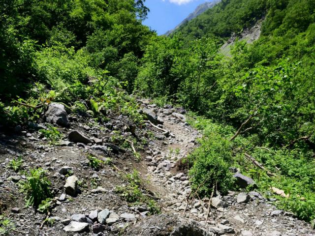北岳(左俣コース)登山口コースガイド 大樺沢崩壊地右岸【登山口ナビ】