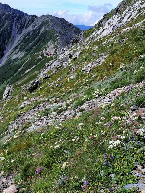 北岳(左俣コース)登山口コースガイド 北岳吊尾根高山植物花畑【登山口ナビ】