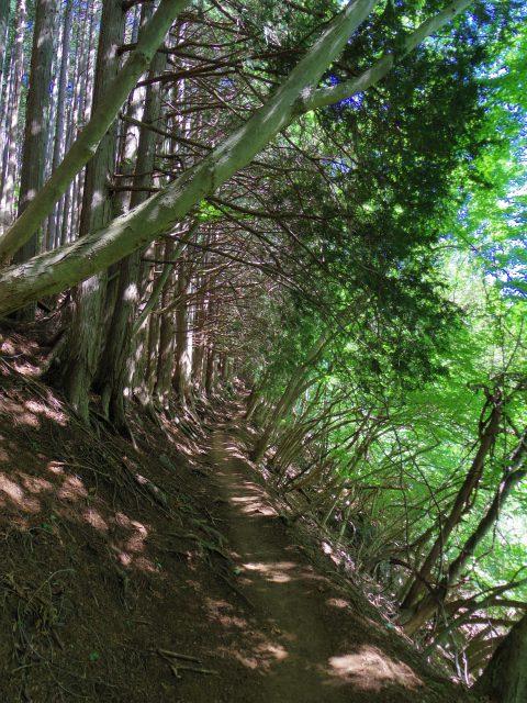 雲取山(七ツ石山・鴨沢ルート)登山口コースガイド 登山道【登山口ナビ】