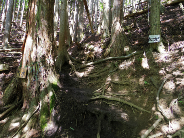 雲取山(七ツ石山・鴨沢ルート)登山口コースガイド 水場【登山口ナビ】