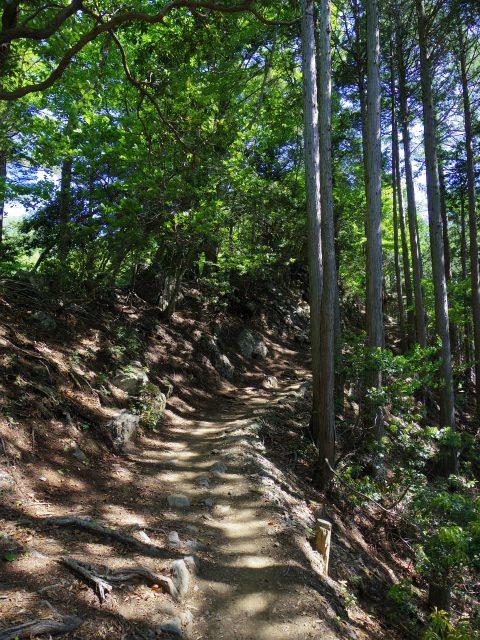 雲取山(七ツ石山・鴨沢ルート)登山口コースガイド 堂所からの登山道【登山口ナビ】