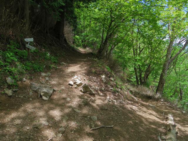 雲取山(七ツ石山・鴨沢ルート)登山口コースガイド 鴨沢と七ツ石小屋の巻き道分岐【登山口ナビ】