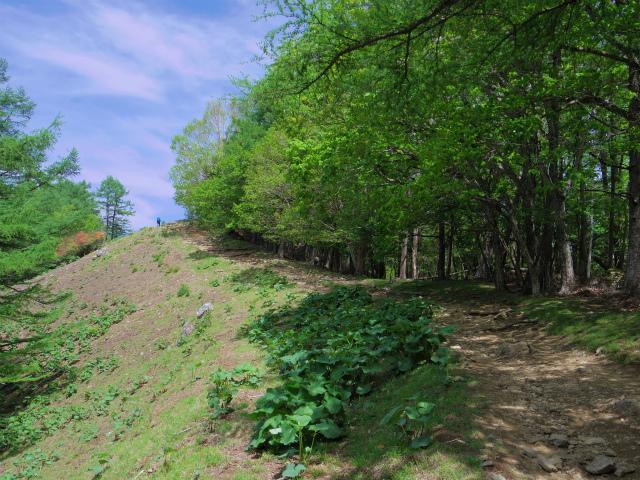 雲取山(七ツ石山・鴨沢ルート)登山口コースガイド 稜線の登山道【登山口ナビ】