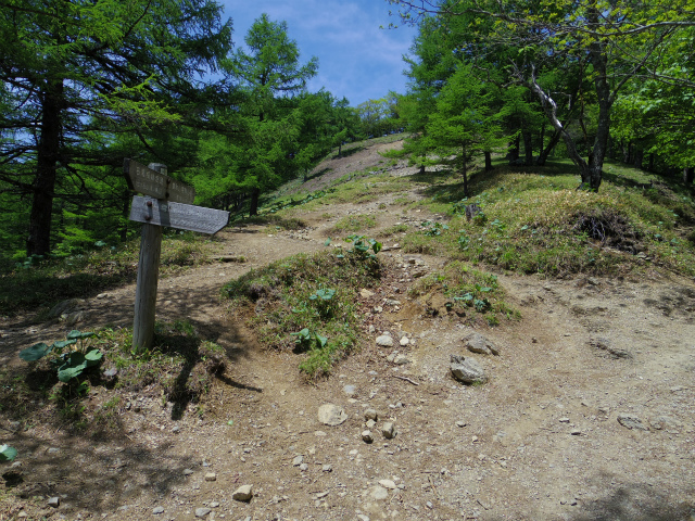 雲取山(七ツ石山・鴨沢ルート)登山口コースガイド ヨモギノ頭巻き道【登山口ナビ】