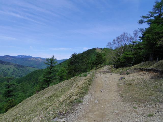 雲取山(七ツ石山・鴨沢ルート)登山口コースガイド 山頂手前の登山道【登山口ナビ】