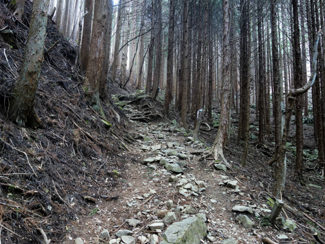 乾徳山(銀晶水・徳和コース)登山口コースガイド 植林帯【登山口ナビ】