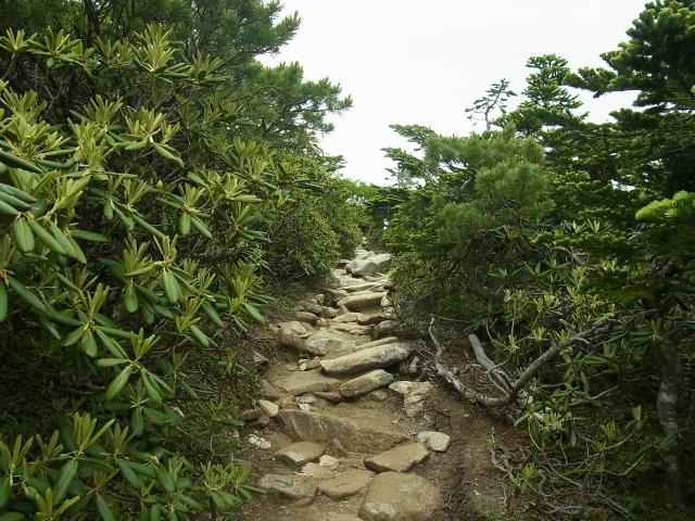 金峰山・五丈石(大弛峠~朝日岳)登山口コースガイド シャクナゲの低灌木帯【登山口ナビ】