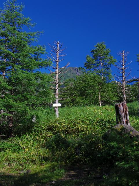 八ヶ岳・横岳(県界尾根)登山口コースガイド 林道分岐【登山口ナビ】