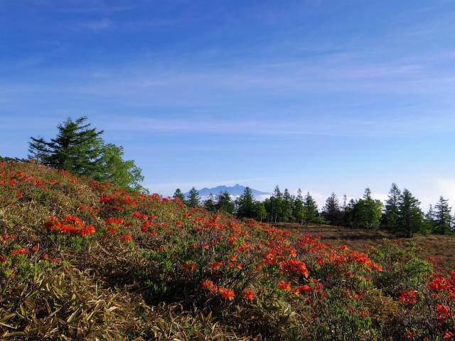 辻山(甘利山~千頭星山)登山口コースガイド 甘利山からの八ヶ岳【登山口ナビ】