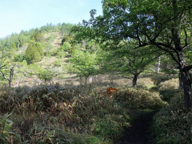 辻山(甘利山~千頭星山)登山口コースガイド 大笹池分岐【登山口ナビ】