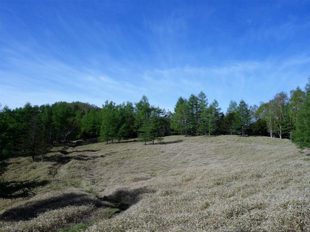辻山(甘利山~千頭星山)登山口コースガイド 稜線の笹原【登山口ナビ】
