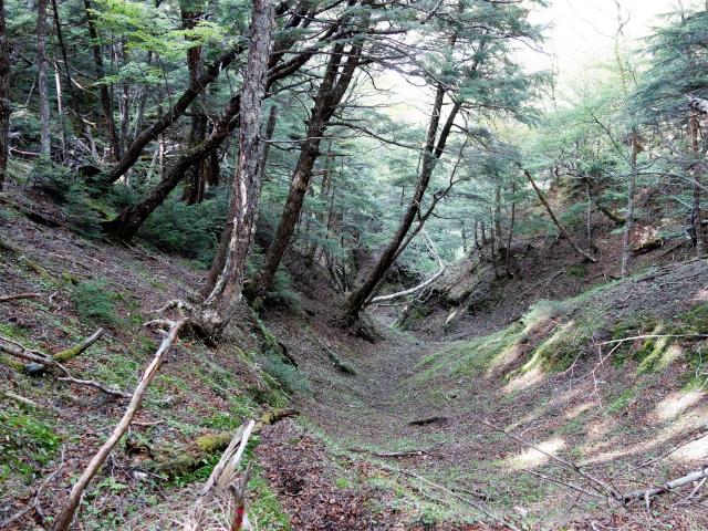 辻山(甘利山~千頭星山)登山口コースガイド 沢の源頭【登山口ナビ】