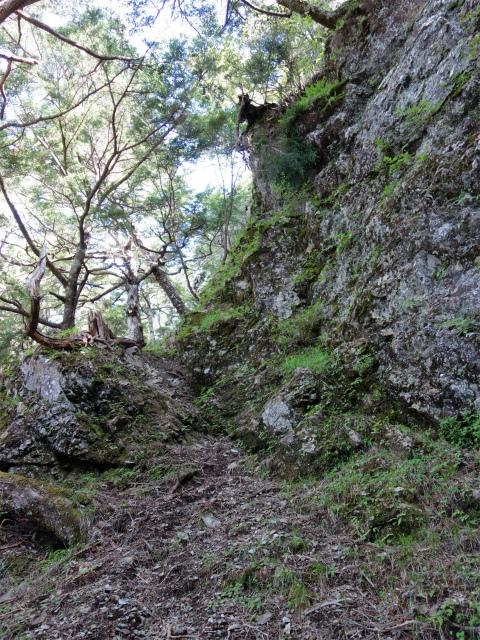 辻山(甘利山~千頭星山)登山口コースガイド 岩壁直下の巻き道【登山口ナビ】