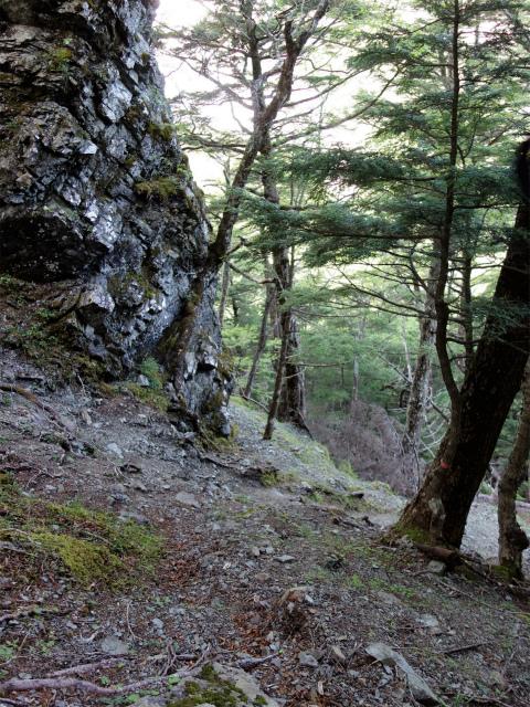 辻山(甘利山~千頭星山)登山口コースガイド 滑りやすい巻き道【登山口ナビ】