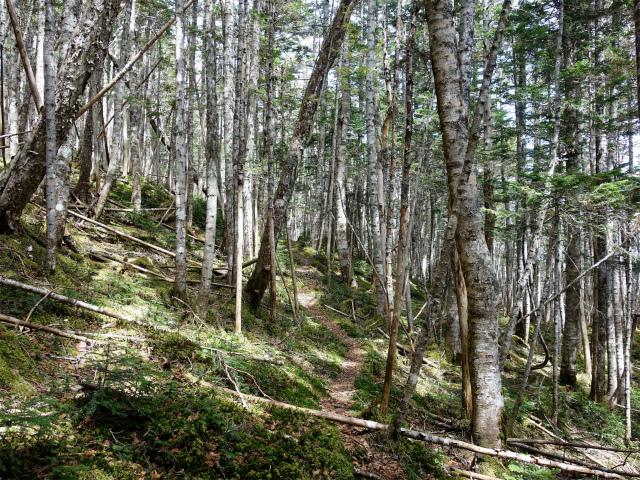 辻山(甘利山~千頭星山)登山口コースガイド シラビソ林と苔【登山口ナビ】