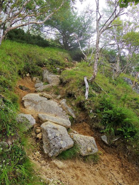 鳳凰三山(広河原~白鳳峠・高嶺)登山口コースガイド 赤抜沢ノ頭への登り返し【登山口ナビ】