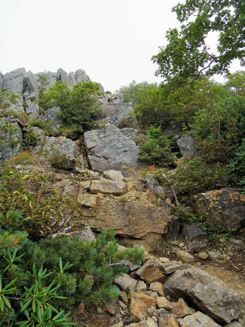 鳳凰三山(広河原~白鳳峠・高嶺)登山口コースガイド 山頂直下の岩場直登【登山口ナビ】