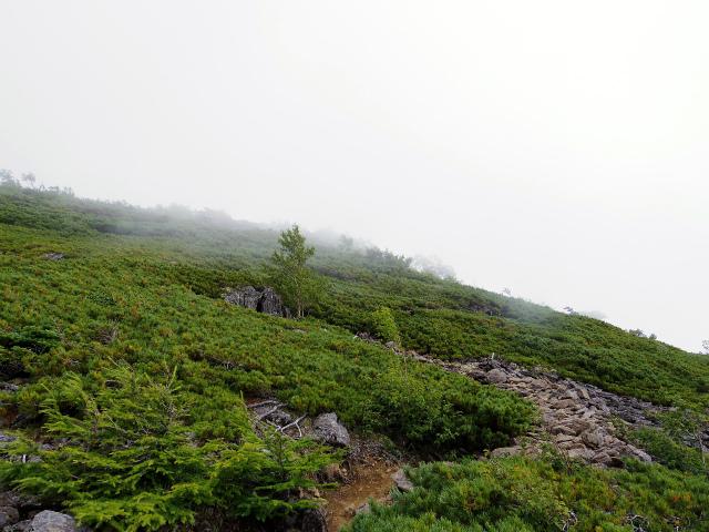 鳳凰三山(広河原~白鳳峠・高嶺)登山口コースガイド ハイマツ帯【登山口ナビ】