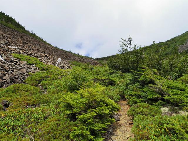鳳凰三山(広河原~白鳳峠・高嶺)登山口コースガイド【登山口ナビ】