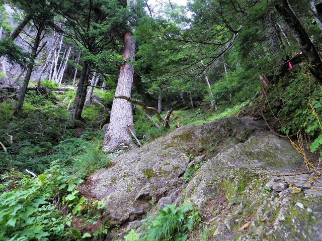 鳳凰三山(広河原~白鳳峠・高嶺)登山口コースガイド 岩場のロープ【登山口ナビ】