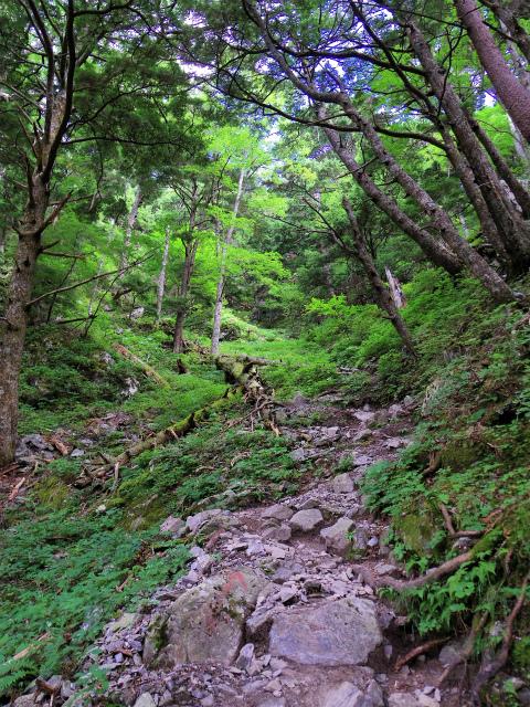 鳳凰三山(広河原~白鳳峠・高嶺)登山口コースガイド 急登【登山口ナビ】