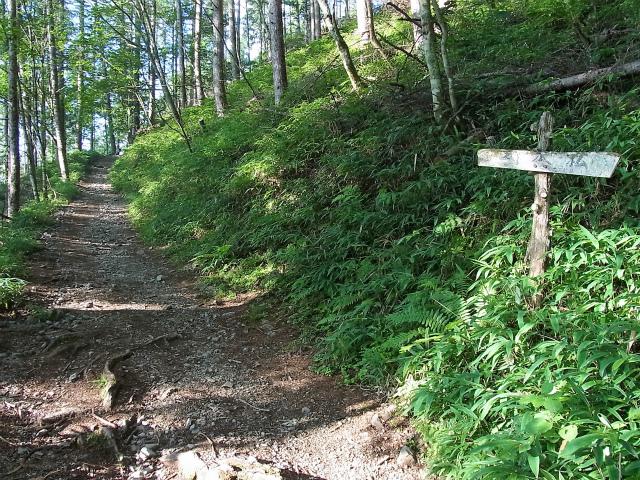 鳳凰三山(夜叉神峠~砂払岳)登山口コースガイド 一本松【登山口ナビ】