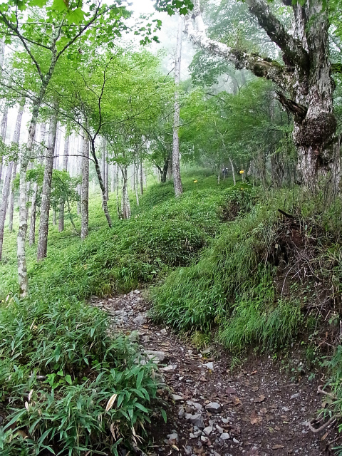 鳳凰三山(夜叉神峠~砂払岳)登山口コースガイド 大崖頭山の急登【登山口ナビ】
