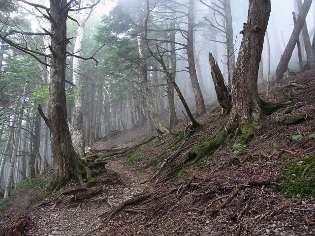 鳳凰三山(夜叉神峠~砂払岳)登山口コースガイド 大崖頭山の西巻き【登山口ナビ】
