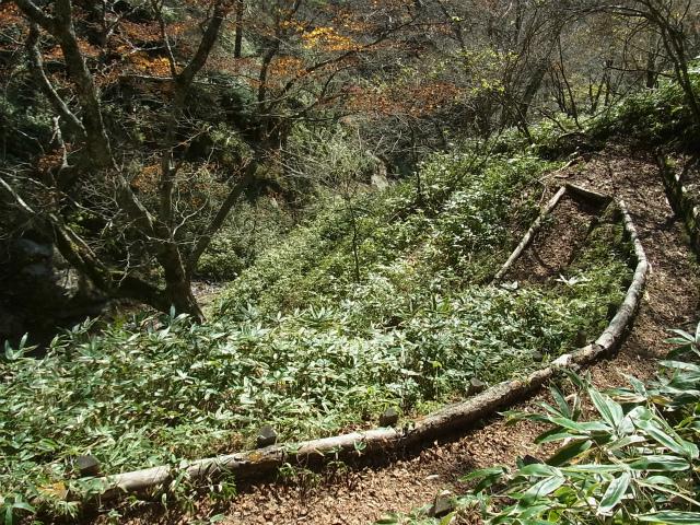 笠取山~唐松尾山~御殿岩 登山口コースガイド【登山口ナビ】