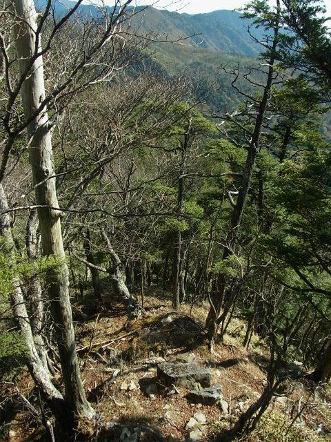 笠取山~唐松尾山~御殿岩 登山口コースガイド 鞍部への下り【登山口ナビ】