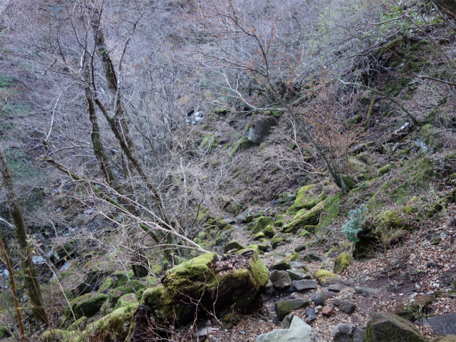 天城山(万二郎岳~万三郎岳周回)登山口コースガイド シャクナゲコース 苔むしたガレ場【登山口ナビ】