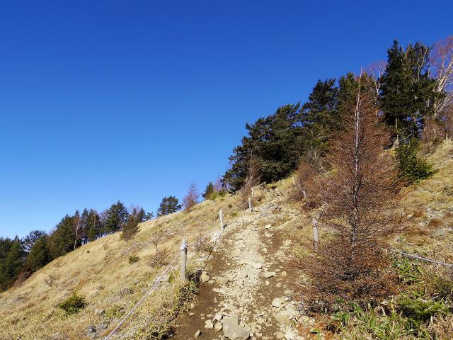 大菩薩嶺(富士見新道) 登山口コースガイド 稜線の登山道【登山口ナビ】