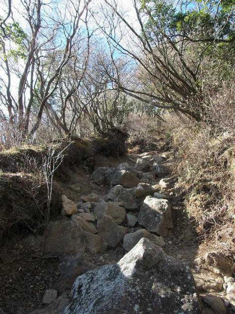 天城山(万二郎岳~万三郎岳周回)登山口コースガイド 馬の背への登り返し【登山口ナビ】