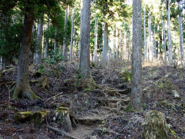 鍋割山(二俣~後沢乗越コース)コースガイド 植林帯【登山口ナビ】