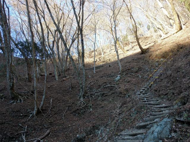 鍋割山(二俣~後沢乗越コース)コースガイド 階段【登山口ナビ】
