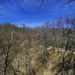 大室山(日陰沢橋~犬越路コース) 登山口コースガイド 緩い稜線【登山口ナビ】