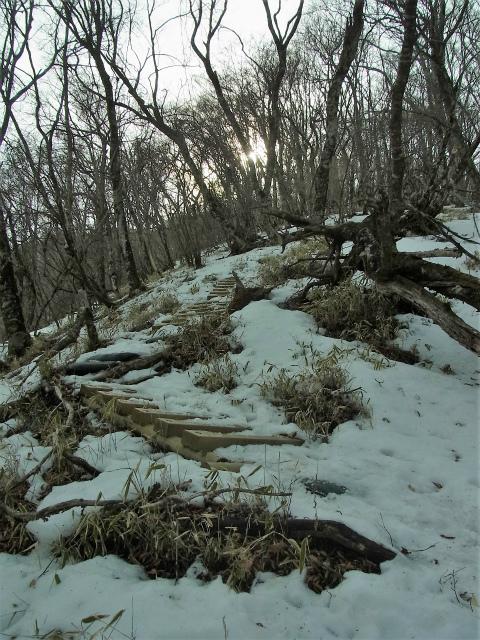 檜洞丸(日陰沢~ヤタ尾根コース) 登山口コースガイド 笹面【登山口ナビ】
