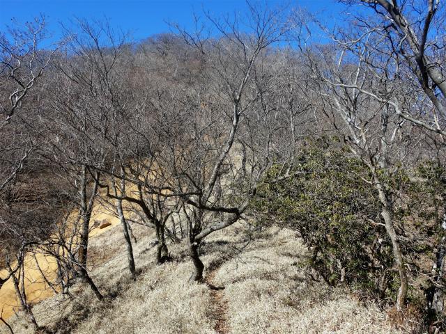 大室山(日陰沢新道コース) 登山口コースガイド 笹面【登山口ナビ】