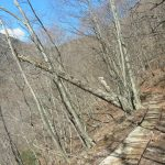 甲武信ヶ岳(近丸新道コース)登山口コースガイド 森林軌道跡のレール【登山口ナビ】