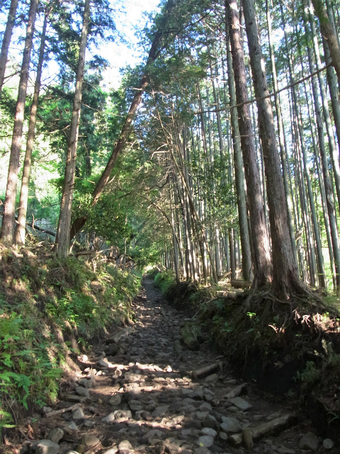 塔ノ岳(大倉尾根コース) 登山口コースガイド【登山口ナビ】