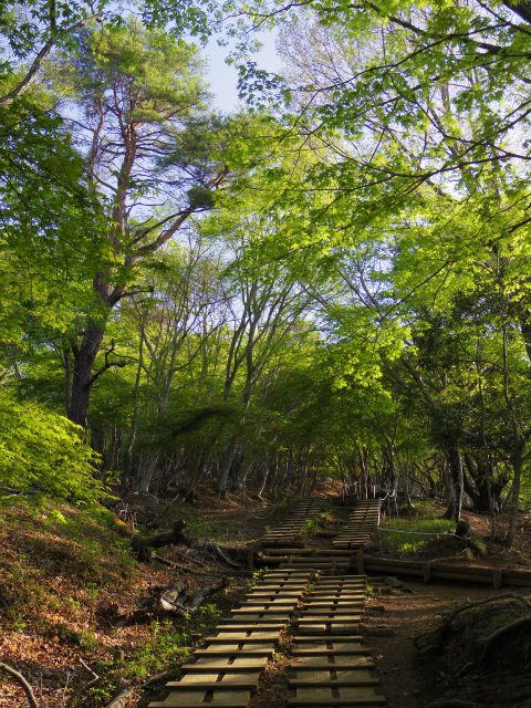 塔ノ岳(大倉尾根コース) 登山口コースガイド モミジ【登山口ナビ】