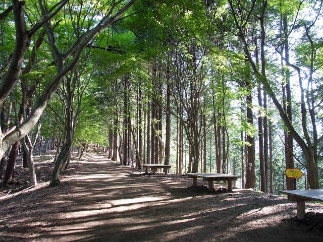 塔ノ岳(大倉尾根コース) 登山口コースガイド 標高800mベンチ【登山口ナビ】