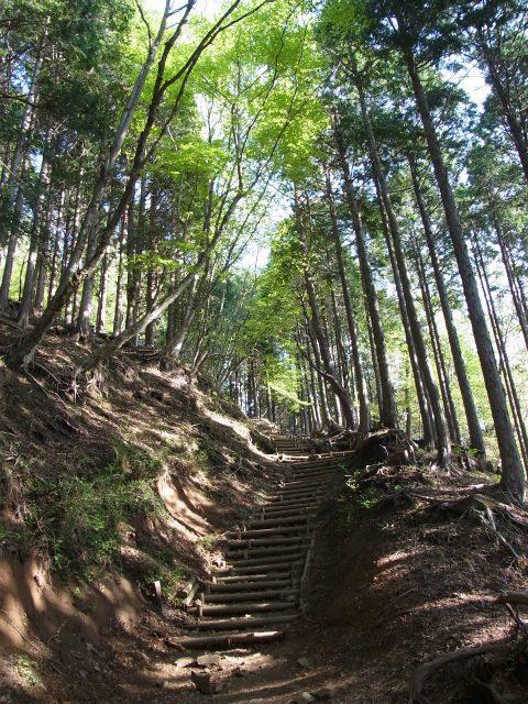塔ノ岳(大倉尾根コース) 登山口コースガイド 階段【登山口ナビ】
