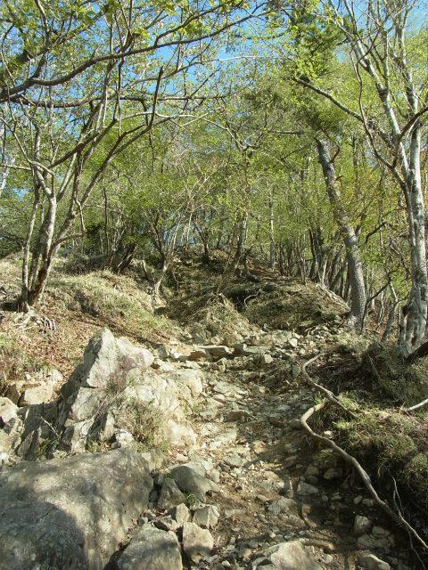 塔ノ岳(二俣~大倉尾根コース) 登山口コースガイド 小草平の急登【登山口ナビ】