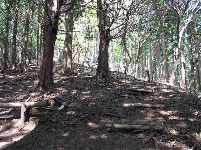 塔ノ岳(烏尾尾根) 登山口コースガイド 南尾根分岐【登山口ナビ】