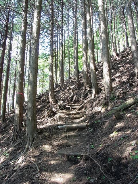 塔ノ岳(烏尾尾根) 登山口コースガイド 植林帯の急登【登山口ナビ】