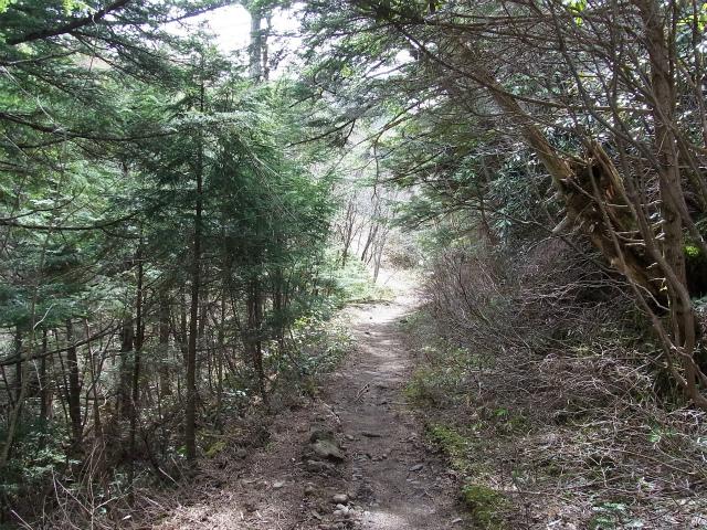 黒斑山(表コース・中コース) 登山口コースガイド 中・裏コース登山道【登山口ナビ】